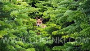 Perfect Green - w zgodzie z naturą