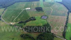 Plantacja choinek w Słoninie